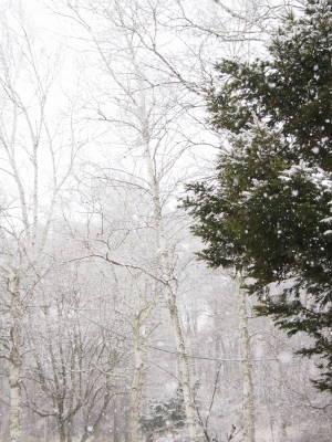 大粒の雪_a0129867_1294261.jpg