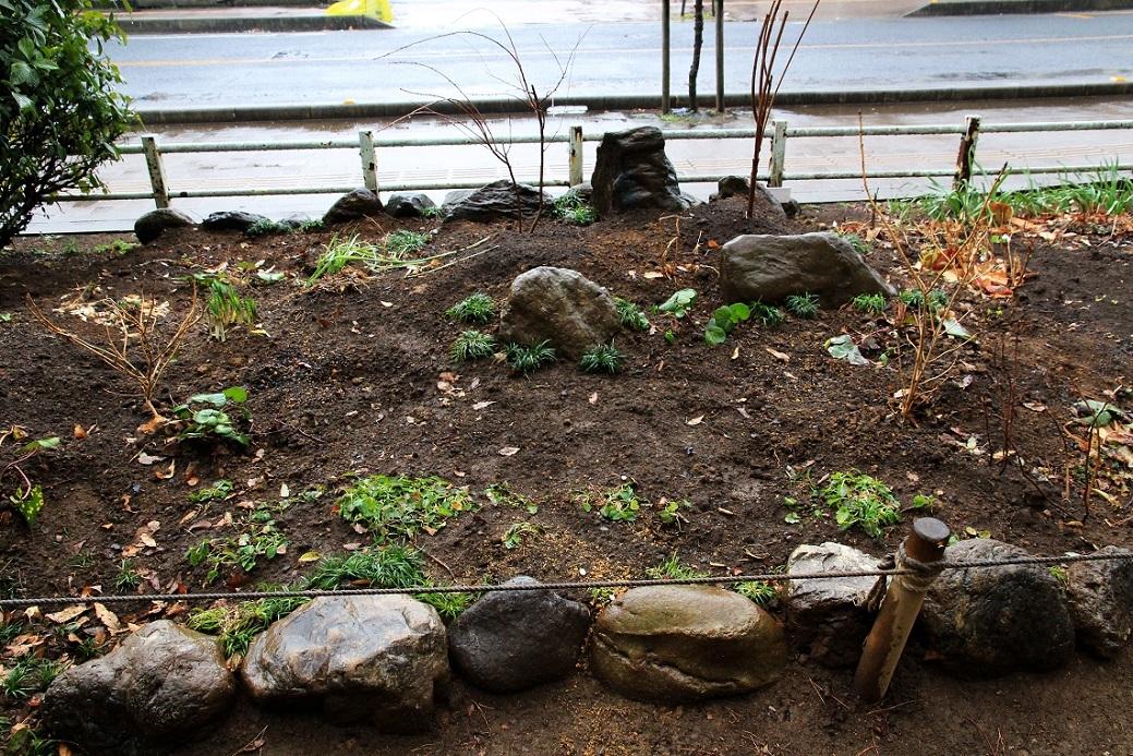 三尊石 ~福岡中央公園の花壇~_a0107574_15043151.jpg