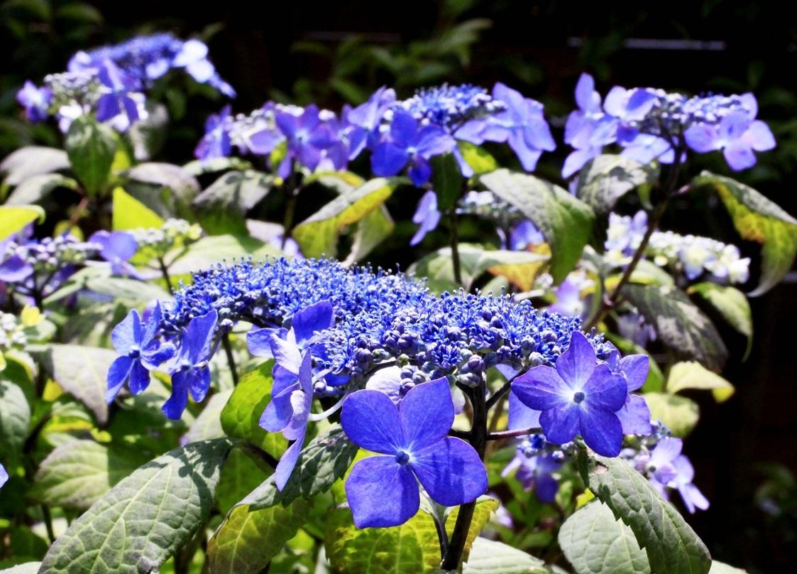 三尊石 ~福岡中央公園の花壇~_a0107574_15344750.jpg