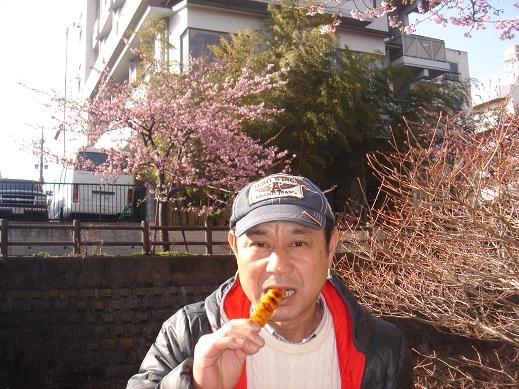 ★近場の河津桜★_e0147297_1841506.jpg