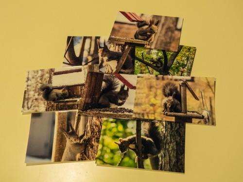 2016年版「エゾリス君ポストカード~第8集~」完成しました!_f0276498_21301328.jpg
