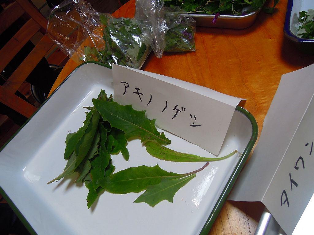 野草観察・試食会_f0121321_166620.jpg