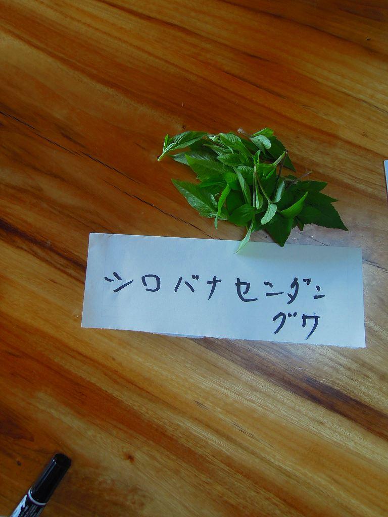 野草観察・試食会_f0121321_1672344.jpg
