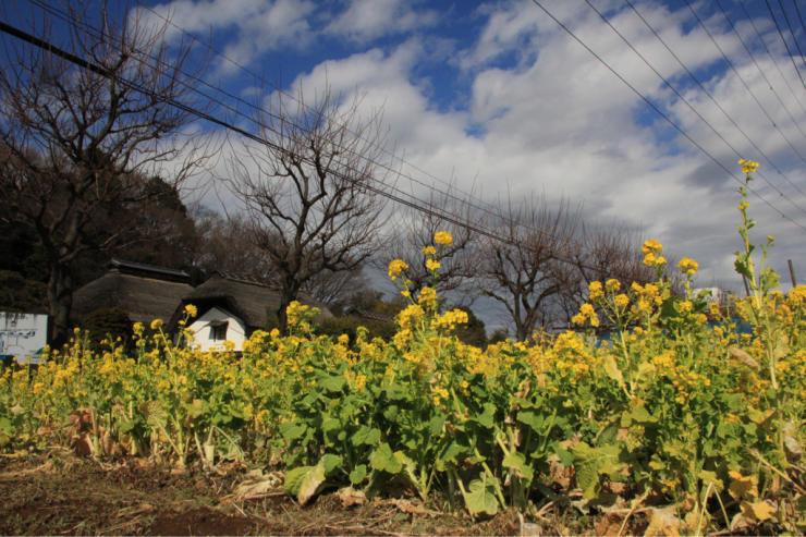 春なんですよねもう(笑)_b0317723_21425121.jpg