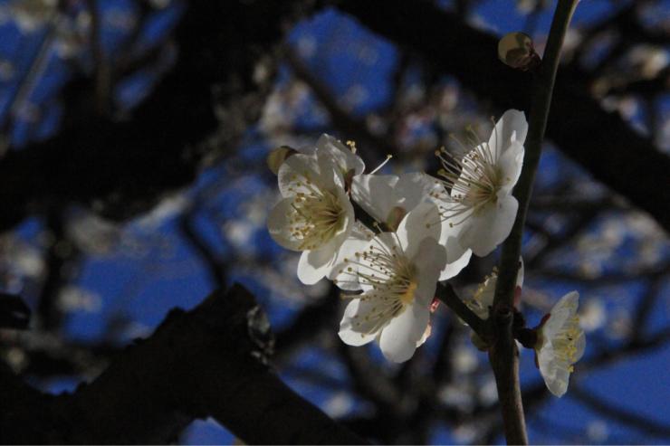 春なんですよねもう(笑)_b0317723_21425288.jpg