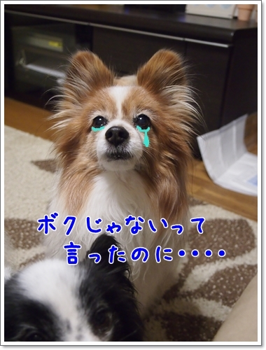 d0013149_01092087.jpg