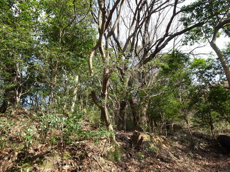 スズメバチの空き巣を2個発見 in うみべの森_c0108460_21280986.jpg