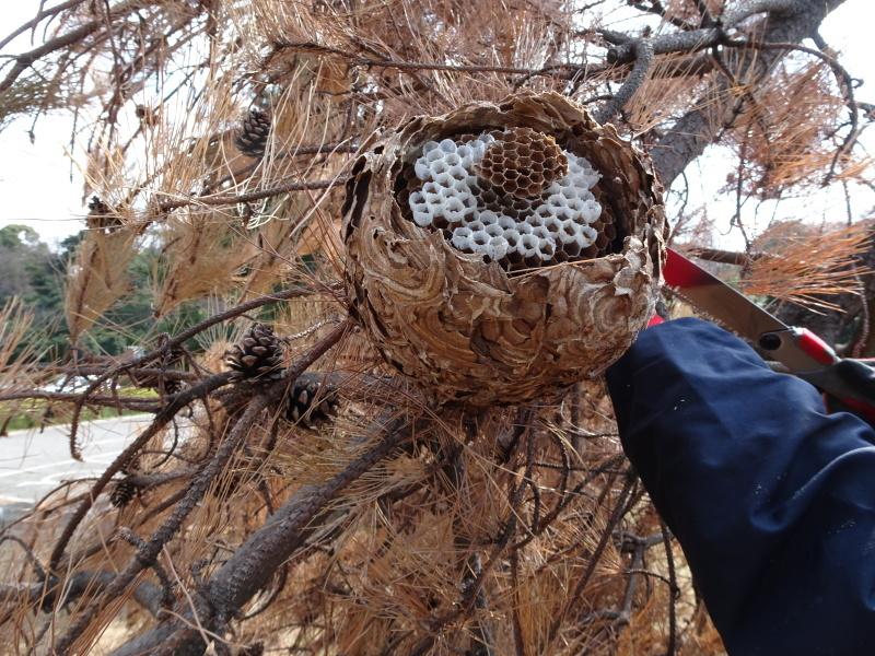 スズメバチの空き巣を2個発見 in うみべの森_c0108460_21322747.jpg