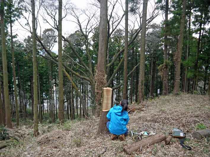 「夫婦桜」の看板作りに着手:2・20六国見山定例手入れ_c0014967_9325851.jpg