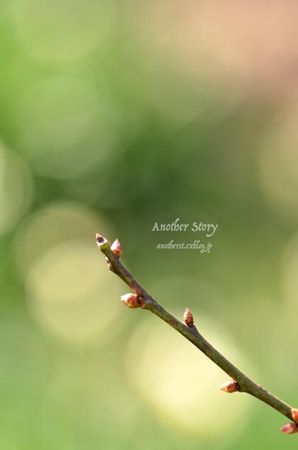 春恋し・・・_a0238574_21502908.jpg