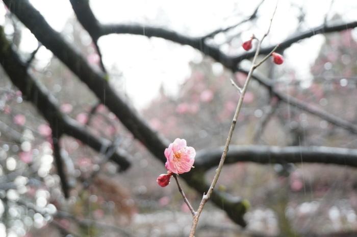 春の色_d0047885_22301905.jpg