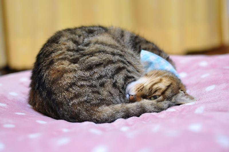 #FRESH猫の日選手権_a0126590_14260495.jpg