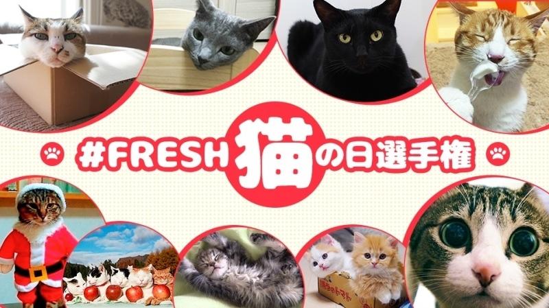 #FRESH猫の日選手権_a0126590_14264725.jpg