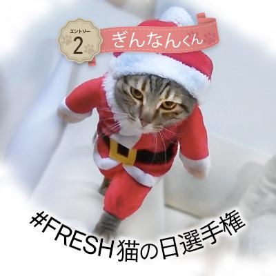 #FRESH猫の日選手権_a0126590_14270450.jpg