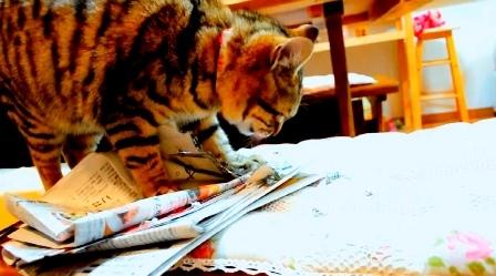 #FRESH猫の日選手権_a0126590_14591608.jpg