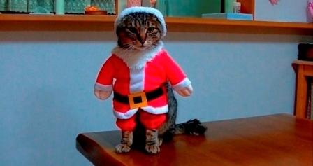 #FRESH猫の日選手権_a0126590_14592806.jpg