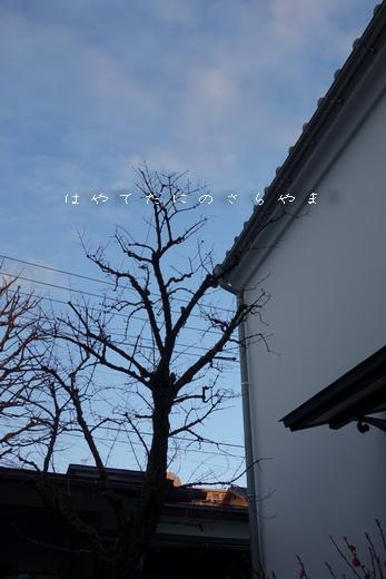 f0126896_22552863.jpg