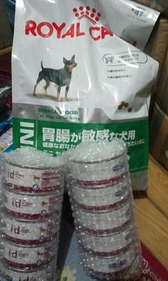 放棄された小型犬たち(2/20)_f0242002_15493094.jpg
