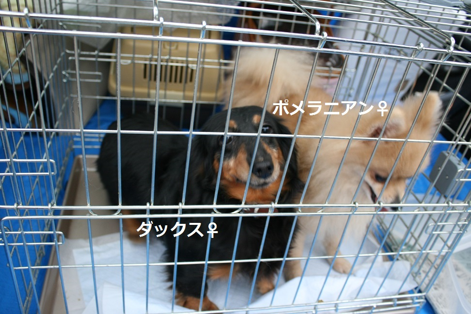 放棄された小型犬たち(2/20)_f0242002_15555494.jpg