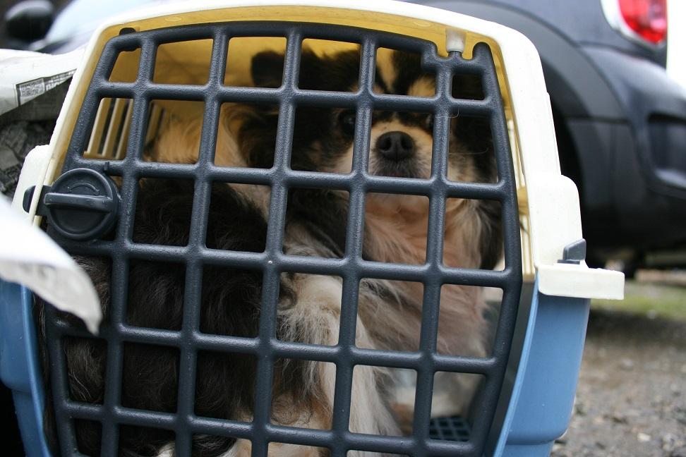 放棄された小型犬たち(2/20)_f0242002_1556145.jpg