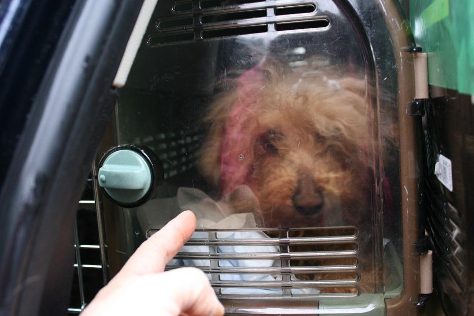 放棄された小型犬たち(2/20)_f0242002_1556223.jpg