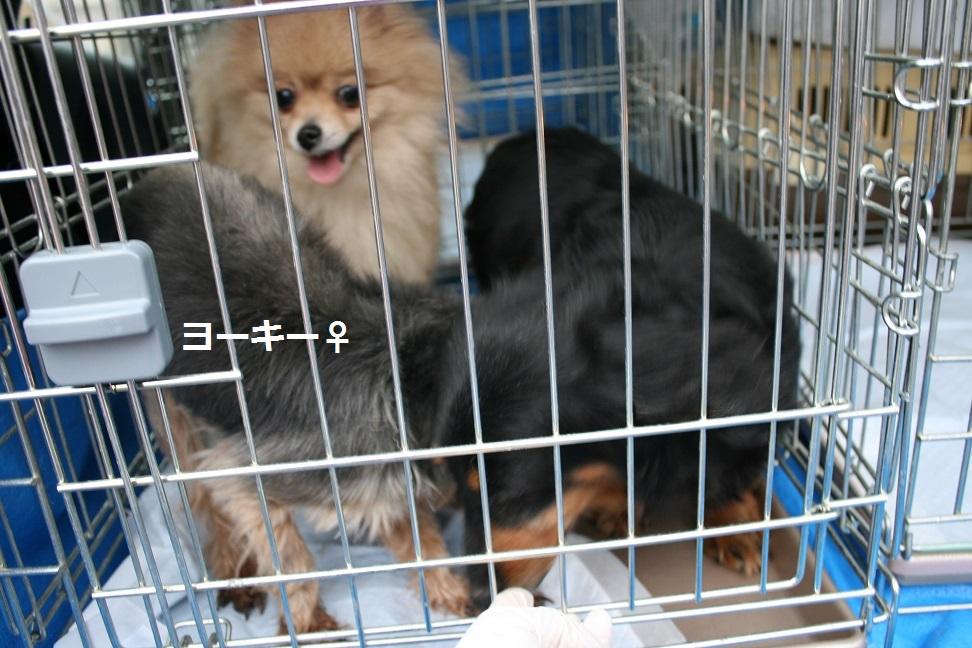 放棄された小型犬たち(2/20)_f0242002_1556455.jpg