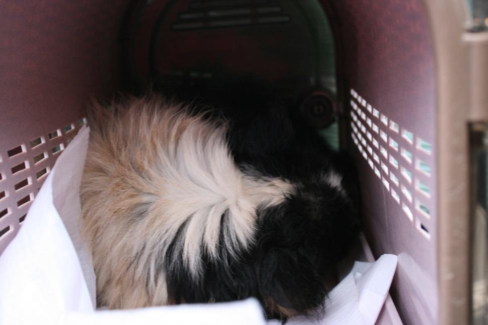 放棄された小型犬たち(2/20)_f0242002_15573578.jpg