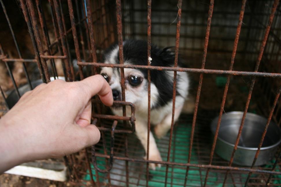 放棄された小型犬たち(2/20)_f0242002_15575562.jpg