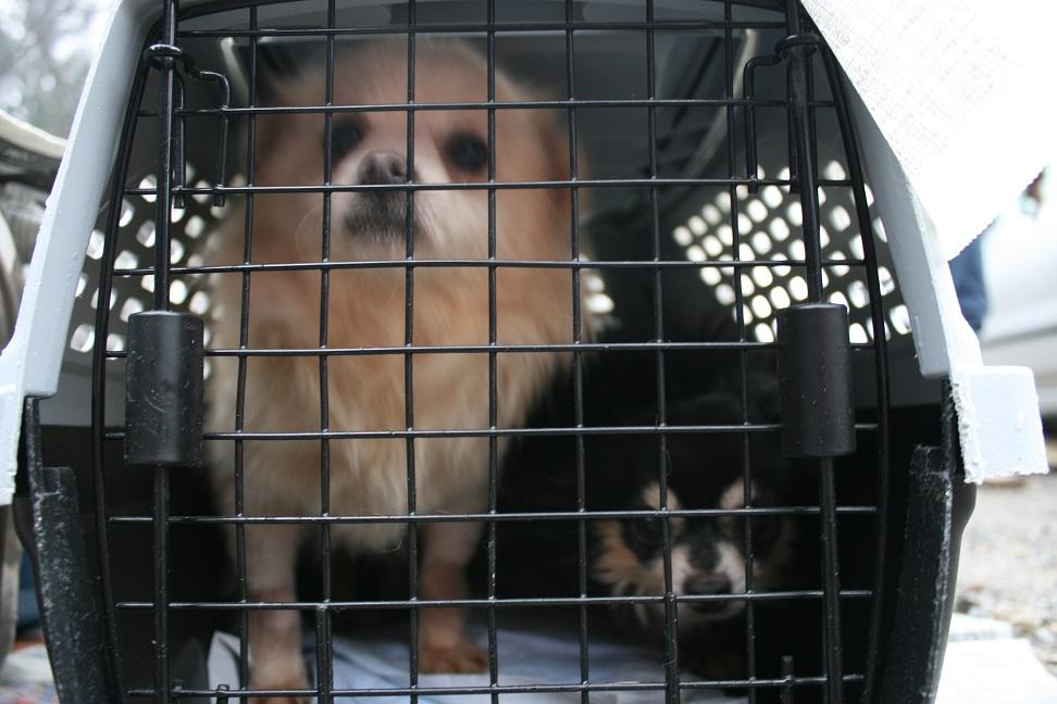 放棄された小型犬たち(2/20)_f0242002_1557934.jpg