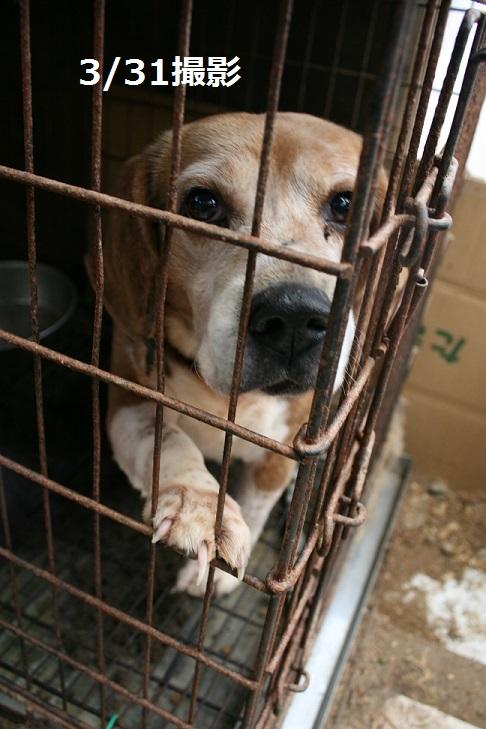 放棄された小型犬たち(2/20)_f0242002_1558419.jpg