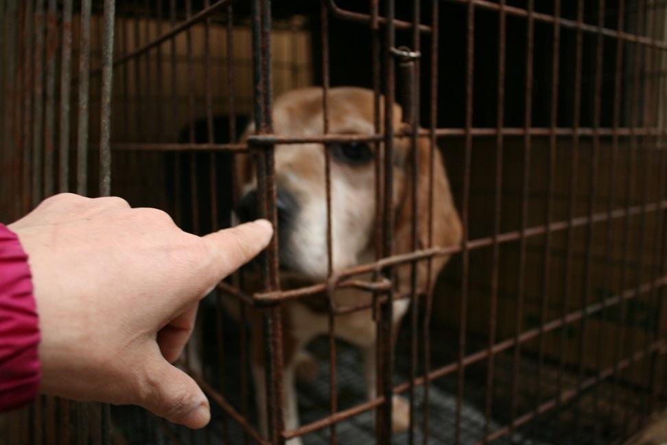 放棄された小型犬たち(2/20)_f0242002_15585761.jpg