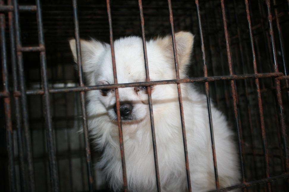 放棄された小型犬たち(2/20)_f0242002_15592276.jpg