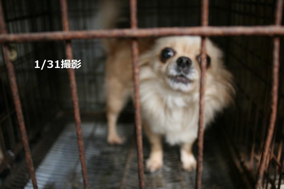 放棄された小型犬たち(2/20)_f0242002_15594464.jpg