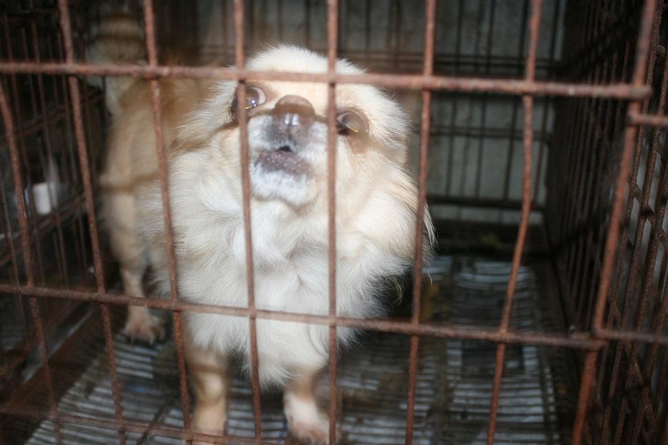 放棄された小型犬たち(2/20)_f0242002_15595243.jpg