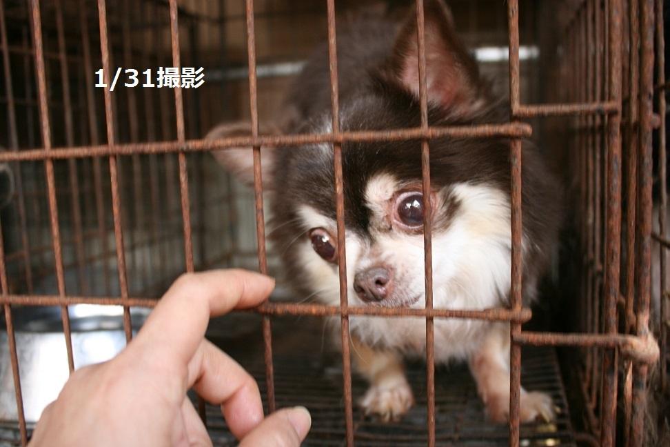 放棄された小型犬たち(2/20)_f0242002_1601457.jpg