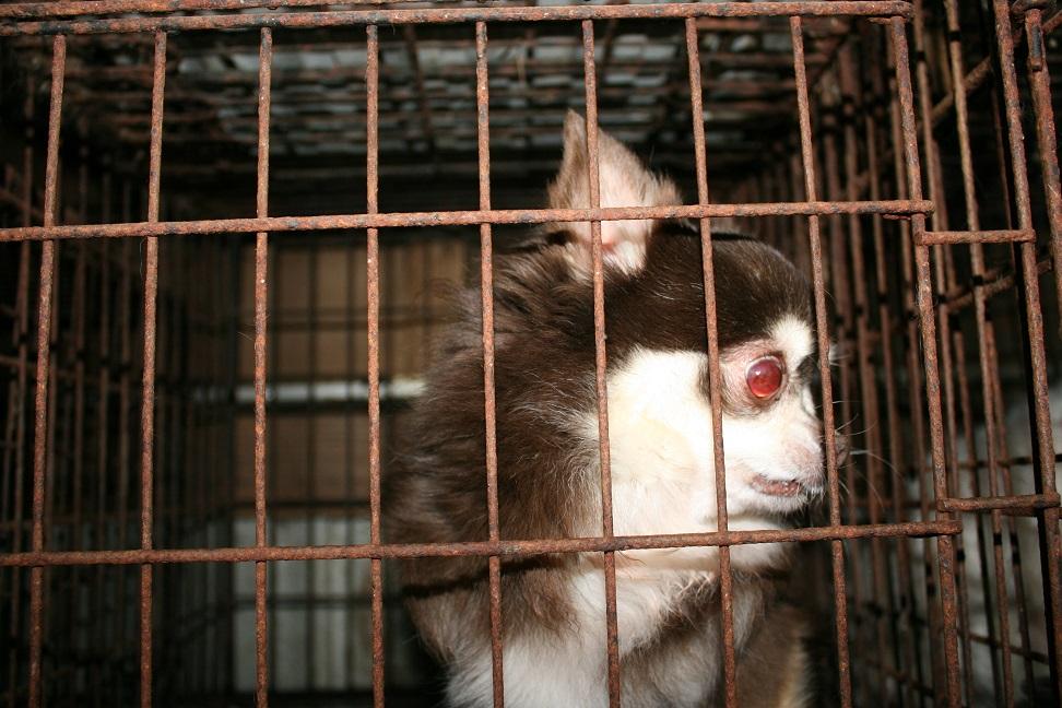 放棄された小型犬たち(2/20)_f0242002_1602345.jpg