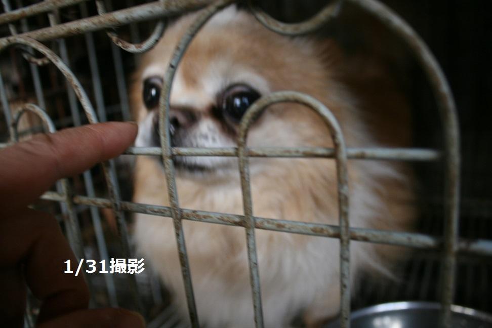 放棄された小型犬たち(2/20)_f0242002_1603492.jpg