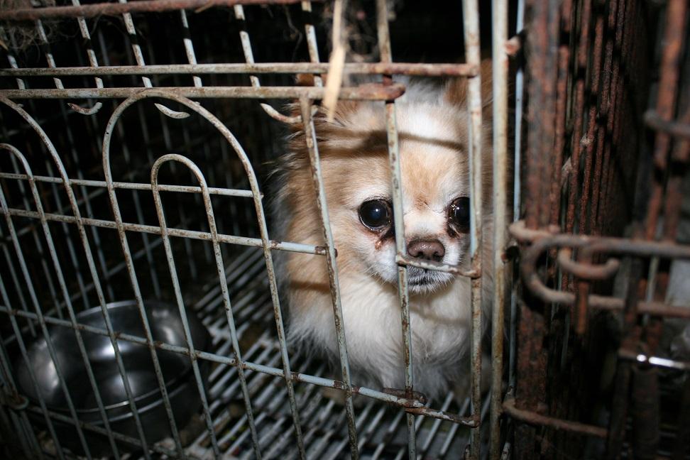 放棄された小型犬たち(2/20)_f0242002_160424.jpg