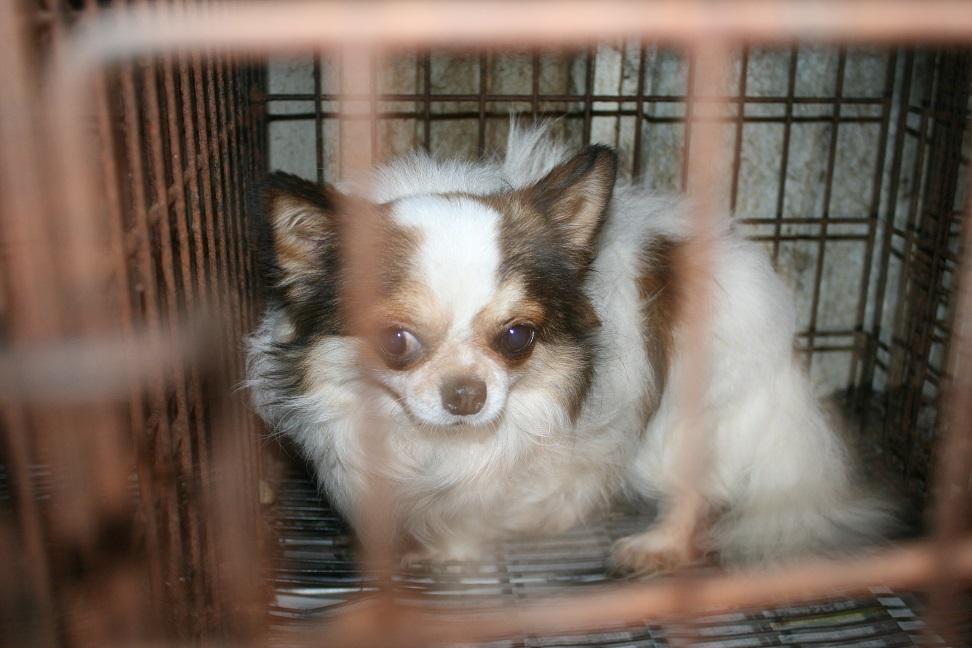 放棄された小型犬たち(2/20)_f0242002_160647.jpg