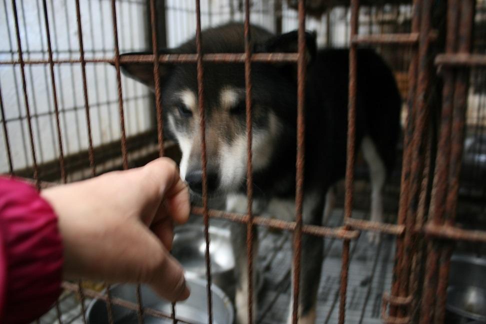 放棄された小型犬たち(2/20)_f0242002_1615796.jpg