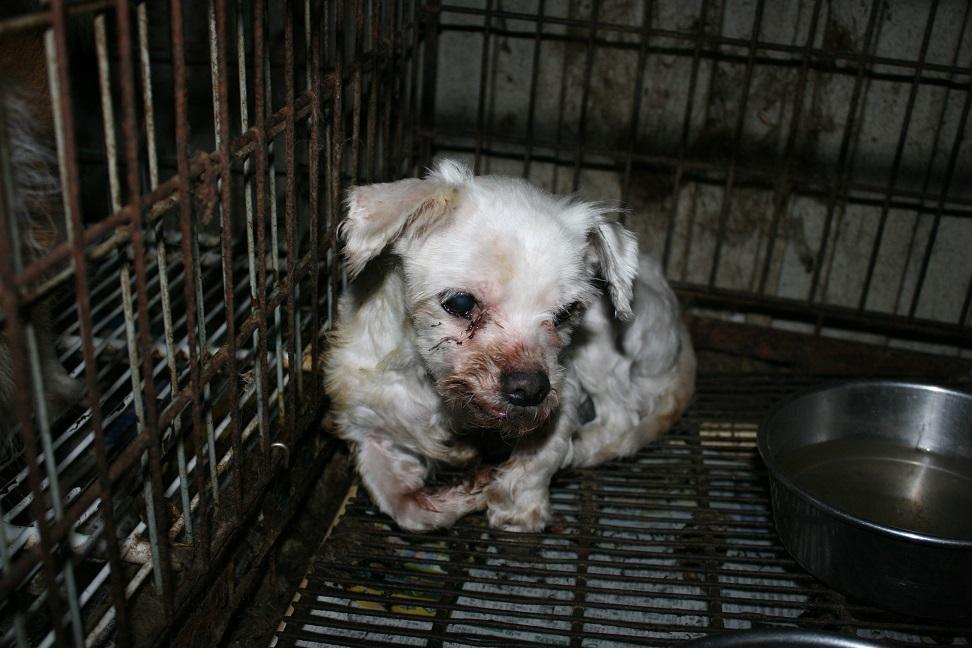放棄された小型犬たち(2/20)_f0242002_161739.jpg