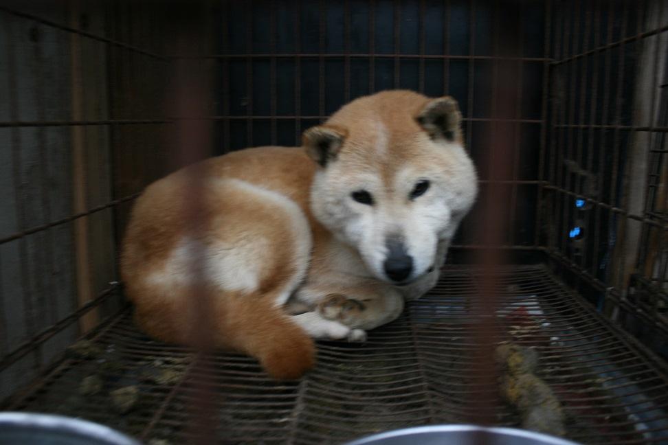 放棄された小型犬たち(2/20)_f0242002_1655226.jpg