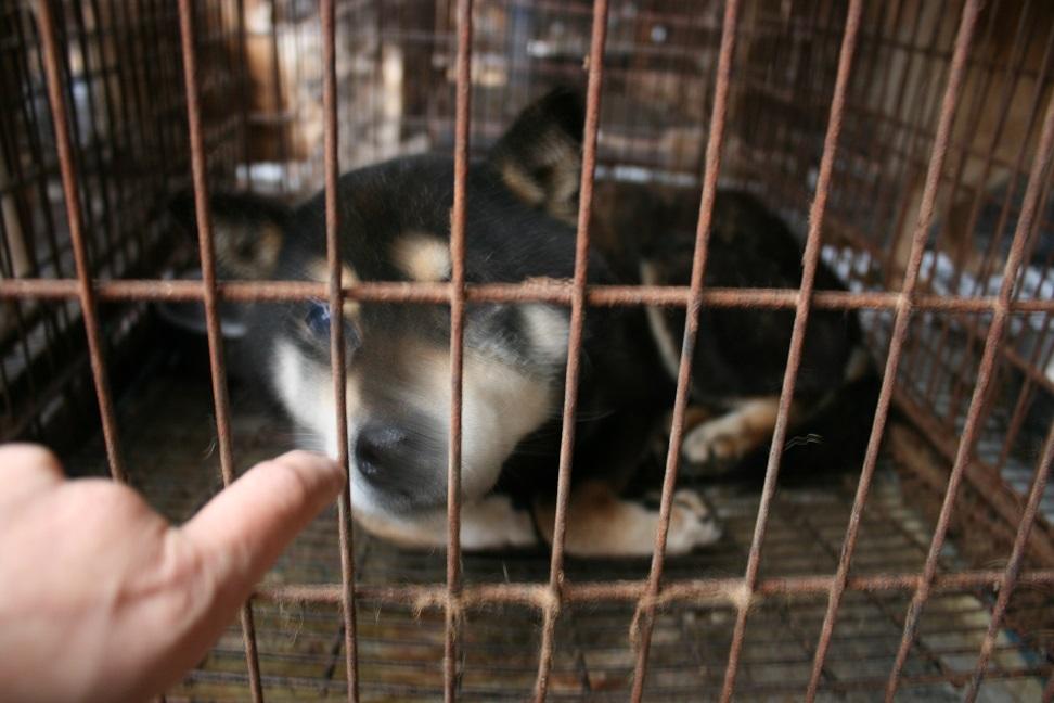 放棄された小型犬たち(2/20)_f0242002_1663378.jpg