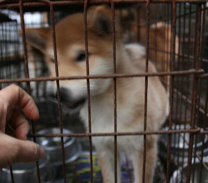 放棄された小型犬たち(2/20)_f0242002_1664161.jpg
