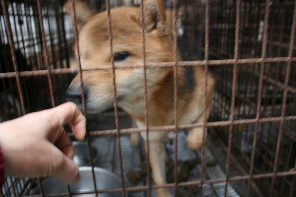 放棄された小型犬たち(2/20)_f0242002_1665055.jpg