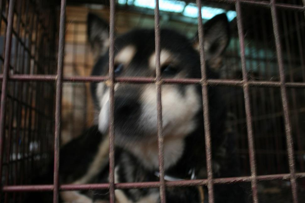放棄された小型犬たち(2/20)_f0242002_1671921.jpg