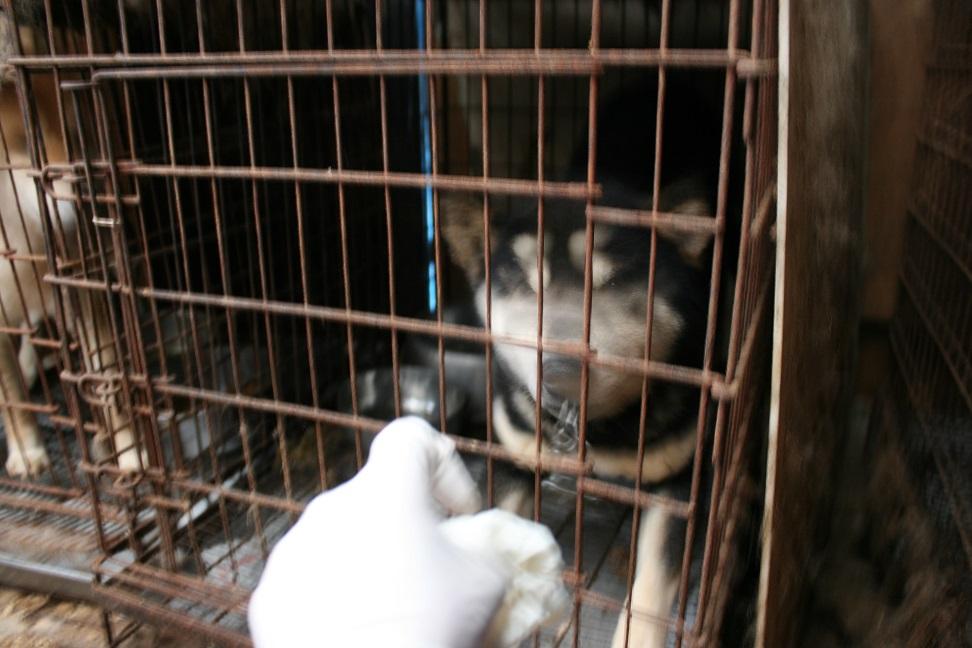 放棄された小型犬たち(2/20)_f0242002_1672671.jpg