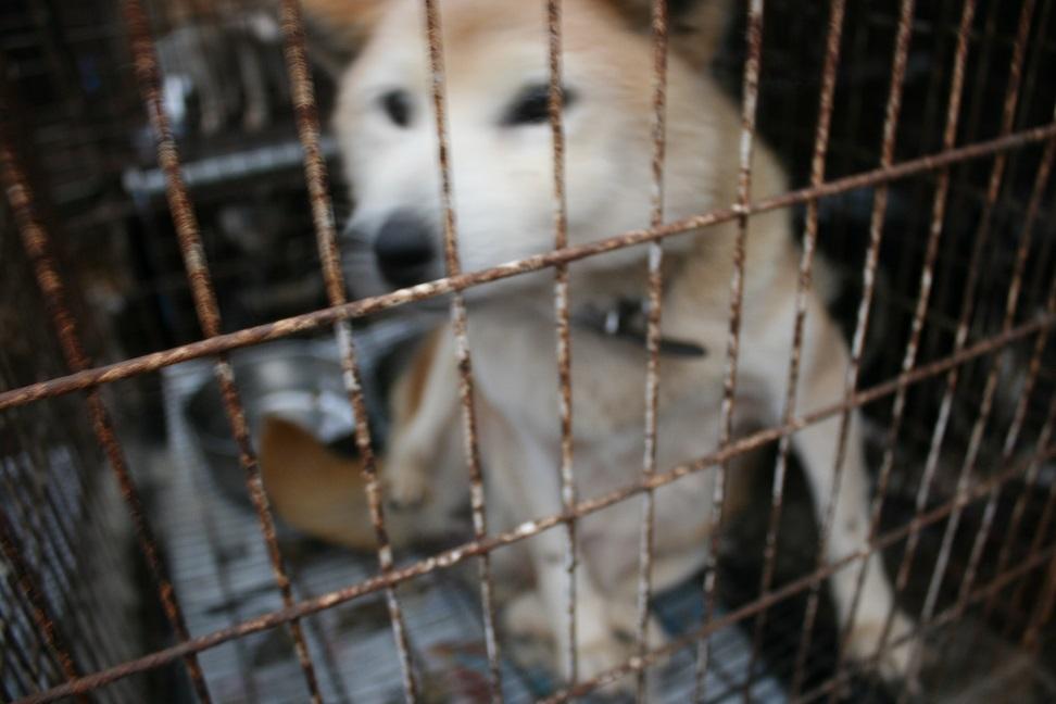 放棄された小型犬たち(2/20)_f0242002_1675435.jpg