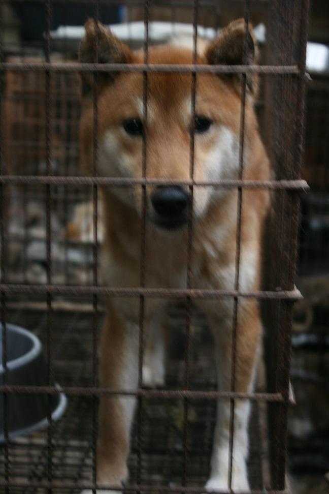 放棄された小型犬たち(2/20)_f0242002_167920.jpg