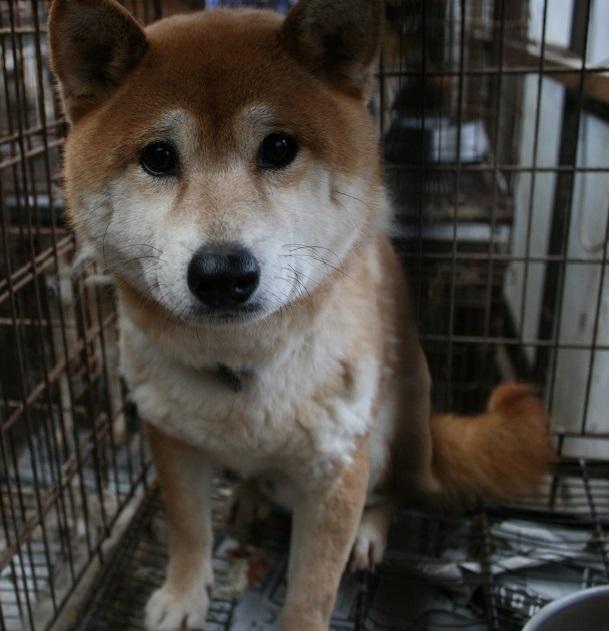 放棄された小型犬たち(2/20)_f0242002_1681240.jpg